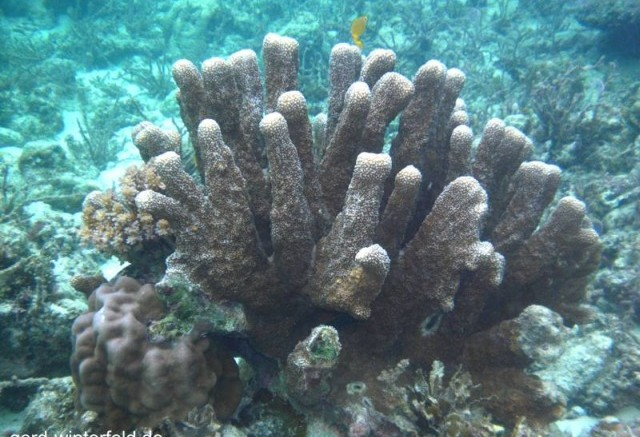 Das 1. Unterwasser - Foto