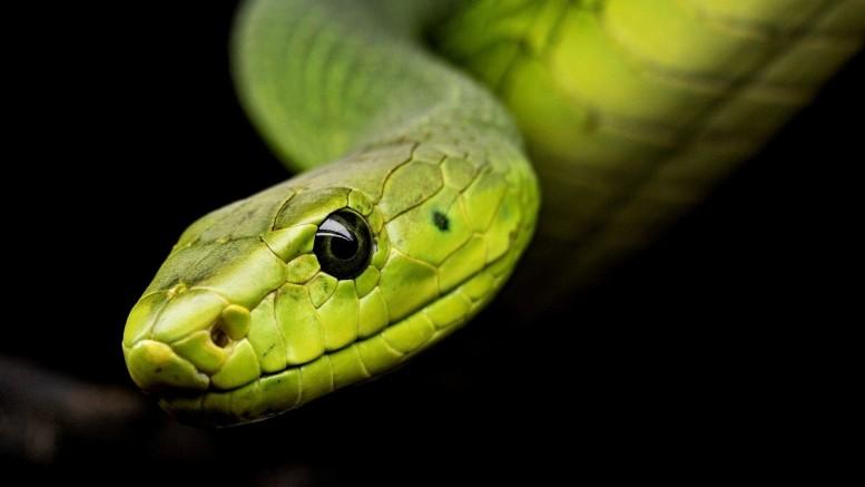 Knoblauch gegen Schlangen